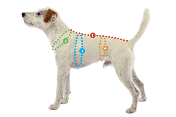 SadePomppa kymppi Hunderegenmantel - Gr. 75 - SALE ❤️ Beagletuff - Rund um den Hund