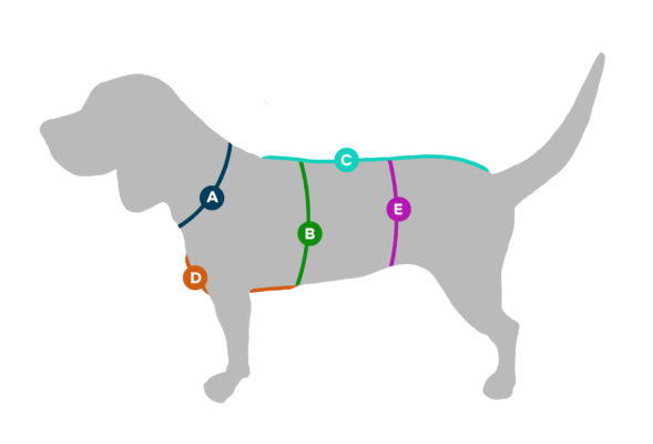 Überraschungsbox Edition Fuchs ❤️ Beagletuff - Rund um den Hund  ❤️ Beagletuff - Rund um den Hund