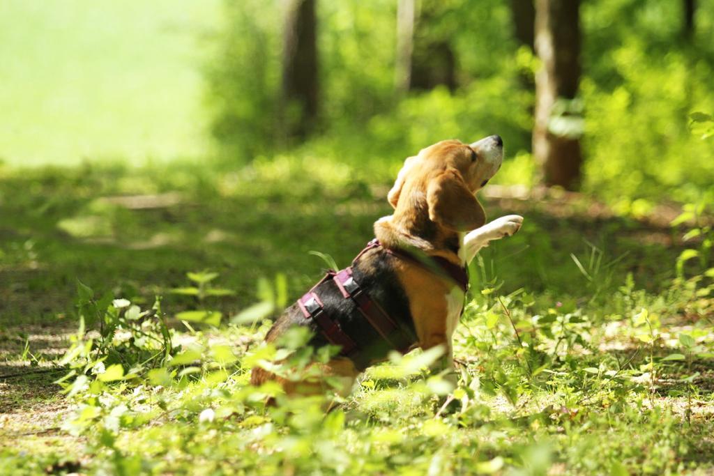 Kontakt ❤️ Beagletuff® - Rund um den Hund